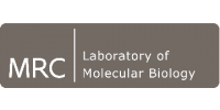Research Group Leader in Immunology and Infection